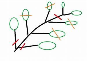 Ahorn Vermehren Steckling : vermehrung von kirschlorbeer kirschlorbeer selber ~ Lizthompson.info Haus und Dekorationen
