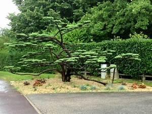 jardinzen decoration jardin japonais miniature lovely With decoration jardin zen exterieur 6 choisir une jardin zen miniature pour relaxer archzine fr