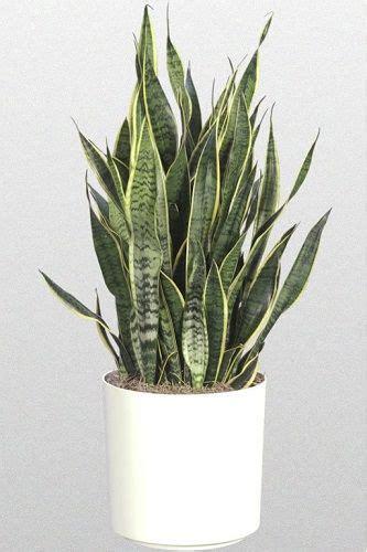 plante verte pour chambre les 25 meilleures idées concernant plante d 39 intérieur sur