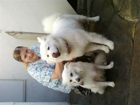 are spitz dogs hypoallergenic dog breeds picture