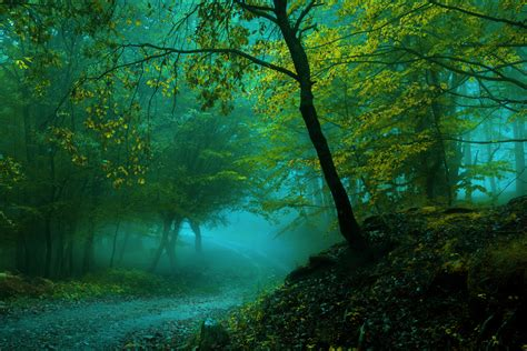 Wallpaper Spring, Forest, Pathway, Fog, 4k, Nature, #4027