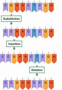 BBC Bitesize - Higher Biology - Genome - Revision 2
