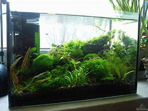 Aquarium Einrichten Anfänger : einrichtungsbeispiele f r wirbellose aquarien ~ Lizthompson.info Haus und Dekorationen