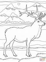 Elk Coloring Pages Printable Wapiti Deer Bull Drawing Super Nature Colouring Adult Easy Animals Moose Supercoloring Cartoons Sheets Drawings Visit sketch template