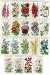 Names and illustrations of traditional English Cottage cottage garden plant list
