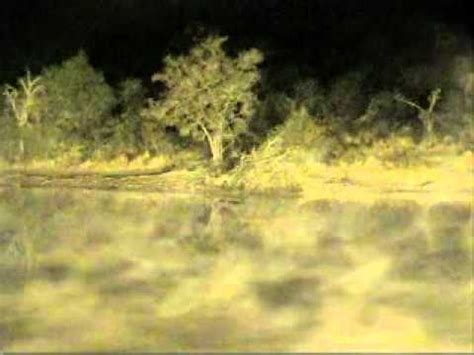 first live hyena kill djuma dam cam aug 3 2011 youtube