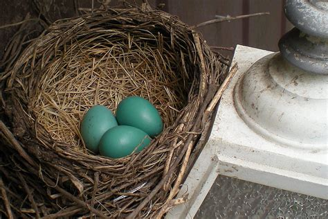 When Is Removing Birds Nests Okay?