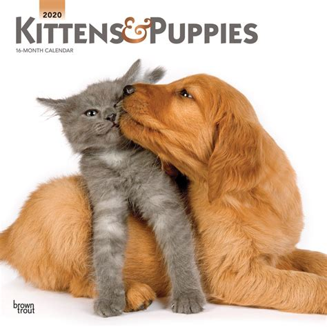 kittens puppies monthly square wall calendar