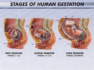Fetus Archives - Presentation Group