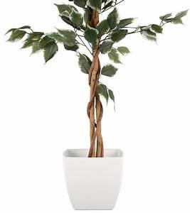 Ficus Benjamini Kaufen : home affaire kunstpflanze ficus benjamini kaufen otto ~ A.2002-acura-tl-radio.info Haus und Dekorationen