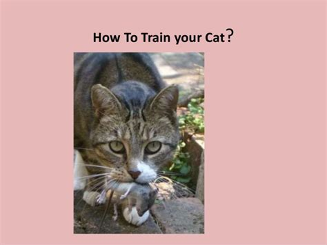 train  cat  complete easy guide
