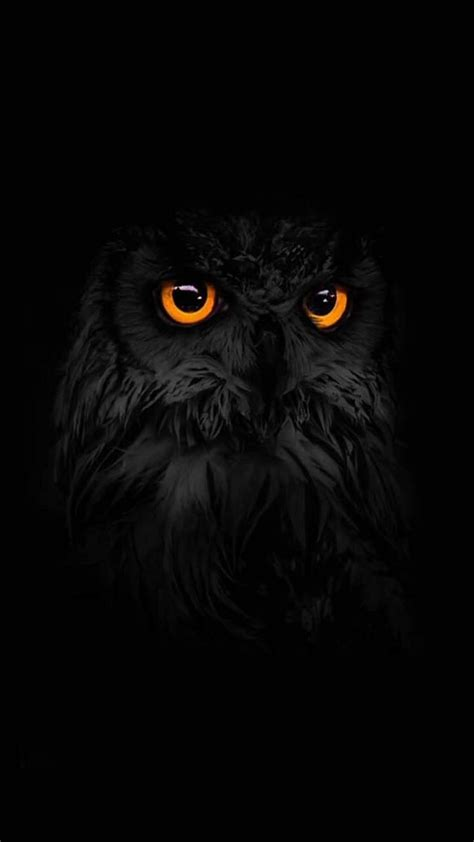 Black Owl Wallpapers by Pin By Lou Lou On Noir Black Owl Wallpaper Owl Animals