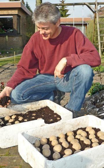 f 252 r eine fr 252 he ernte kartoffeln richtig vorkeimen garten kartoffeln pflanzen gew 228 chshaus