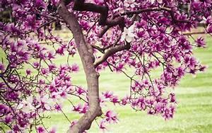 Bäume Für Den Vorgarten : zierb ume f r den vorgarten ~ Michelbontemps.com Haus und Dekorationen