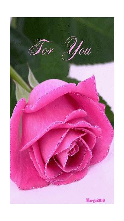 Flowers Roses Rose Gifs Animation Mamaw Pink