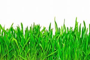 Isolated green grass on white background | Stock Photo ...