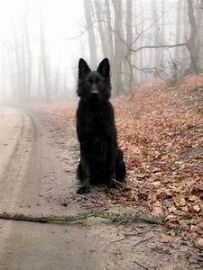 The Black Wolf | Dog shaped heart ♡♥ DOGS! | Pinterest