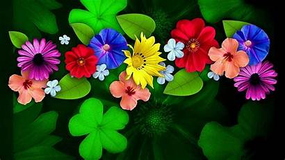 Flower Flowers 4k Wallpapers Ultra Colorful Desktop