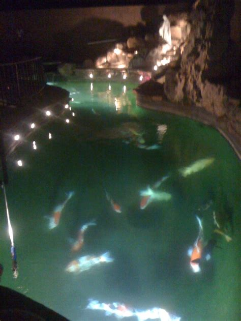 koi pond lighting ideas 50 best beautiful koi ponds images on pinterest water features koi ponds and backyard ponds