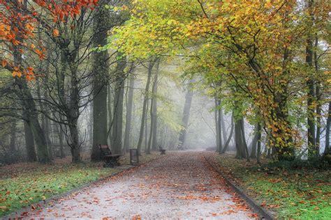 parks, Belgium, Flemish, Region, Meise, Fog, Trees, Nature ...