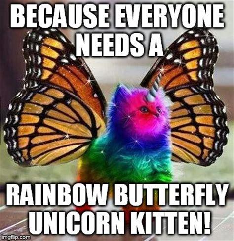 Unicorn Rainbow Meme - rainbow unicorn butterfly kitten imgflip