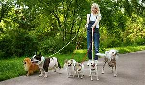 7 tips on how to be a successful dog walker for Puppy dog walker