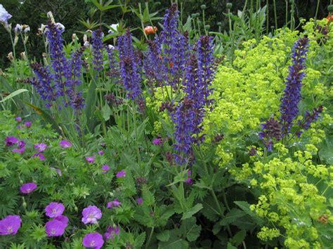 perennial garden rocky coast news tending the perennial garden ii