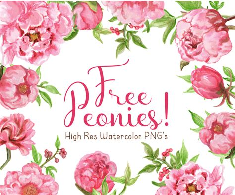 peony clipart free watercolor peonies clipart