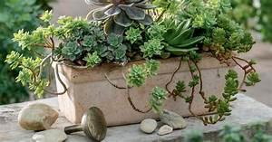 sukkulenten pflanzen pflege und tipps mein schoner garten With französischer balkon mit garten deko steine