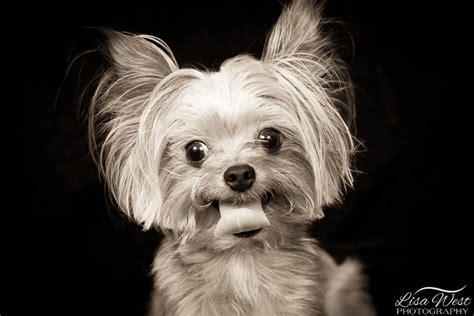 pittsburgh pet photographer dog photography lisa west