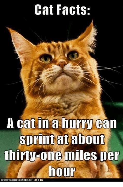 Cat Facts Meme - funny cat memes best cute kitten meme and pictures