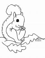 Squirrel Coloring Preschool Printable Squirrels Clipart Fall Cliparts Drawing Animals Adult Line Leaves Library Clip Popular Chihuahua Coloringhome Animal sketch template