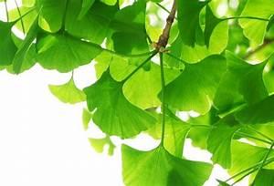 Bienfaits Du Thé Vert : vert ~ Melissatoandfro.com Idées de Décoration