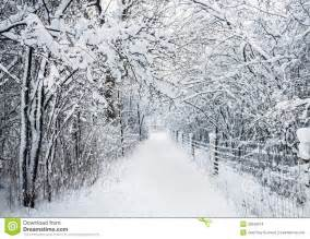 winter pathway in snowstorm stock images image 32648214