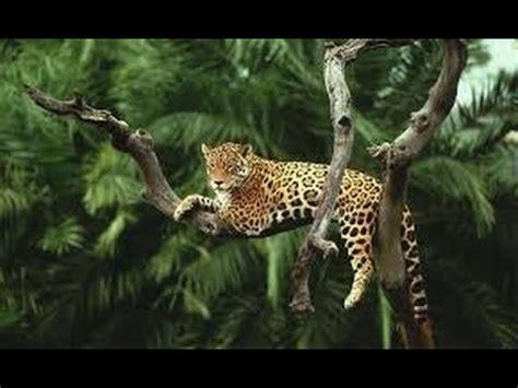 amazon rainforest animals discover  animals