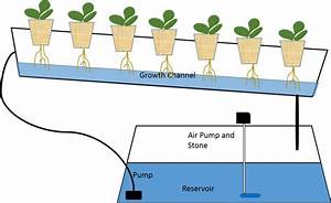 A Guide For Beginners In Hydroponics Gardening
