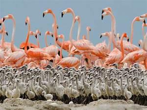 best wildlife photography flamingo 22