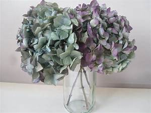 How to Naturally Dry Hydrangeas The Garden Glove