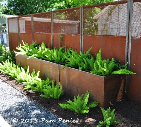 ferns in planters patios decks digging