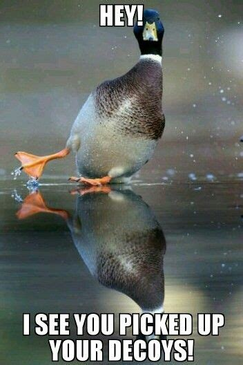 Duck Hunting Memes - duck hunting memes funny duck hunting pinterest memes and funny animal