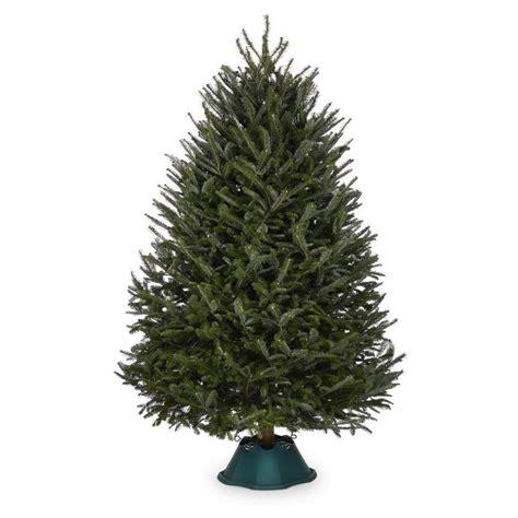 shop   ft fresh fraser fir christmas tree  lowescom