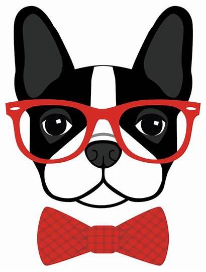 Boston Clip Terrier Dog Glasses Clipart Brindle