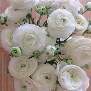 Bouquet Fleurs Blanches : photo gratuite renoncules fleurs fleurs blanches ~ Premium-room.com Idées de Décoration