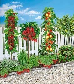 Pflanzen Günstig Kaufen : mein sch ner garten naschbeet pflanzfertig 18 pflanzen pflanzen blumen pflanzen und diy ~ A.2002-acura-tl-radio.info Haus und Dekorationen