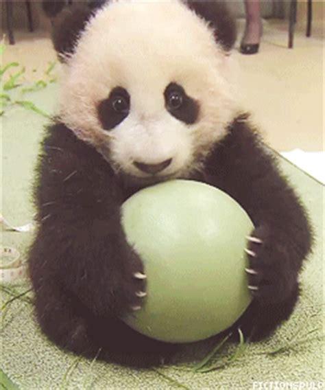 giant pandas tumblr