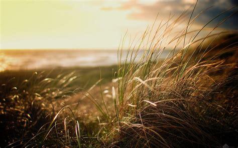 nature, Beach, Grass Wallpapers HD / Desktop and Mobile ...