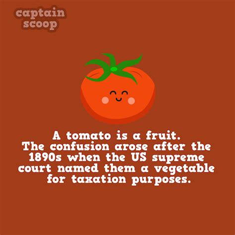 cute illustrations reveal cool facts  common fruits