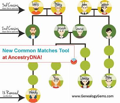Ancestrydna Matches Common Tool Dna Tree Ancestry