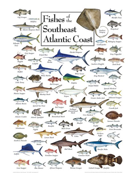 fish   south atlantic coast puzzle jigsaw puzzles