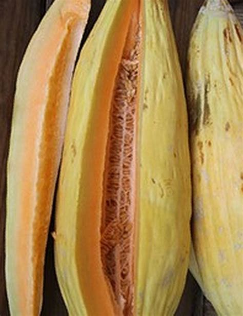 Banana Melon Heirloom Seeds Pack of 30   GreenMyLife